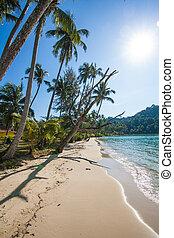 tropikus, tengerpart., tengerpart, képben látható, kiütés,...
