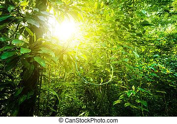 tropikus, természetes, erdő