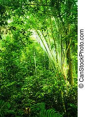 tropikus, természetes, sűrű erdő