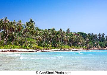 tropikus, white homok, tengerpart, noha, pálma, fa., koh, kood, thaiföld