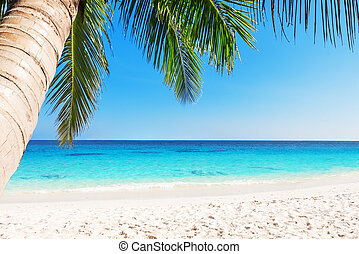 tropikus, white homok, tengerpart, noha, pálma