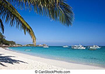 tropikus, white homok, tengerpart