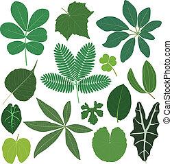 tropikus, zöld, levél növényen, berendezés