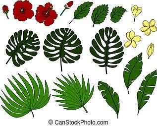 tropique, feuilles, fleurs, paume
