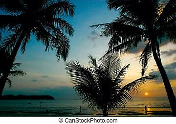 tropiques, coucher soleil