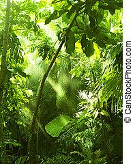tropisch bos, bomen, in, zonlicht, en, regen
