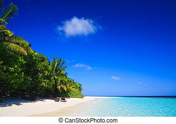 tropisch paradijs, op, malediven