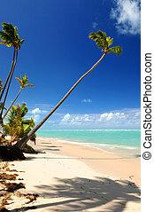 tropisch strand