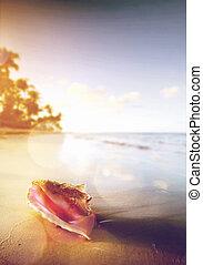 tropisch strand, schaal, kunst