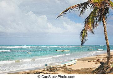 tropisch strand, scheepje