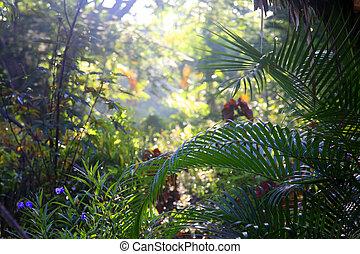 tropische , bäume, hintergrund