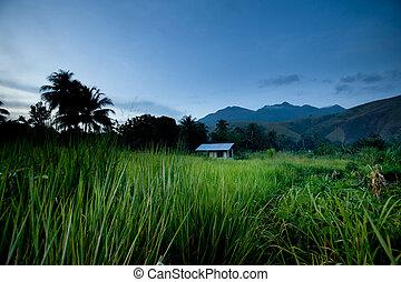 tropische , berg, hut