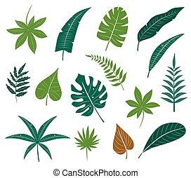 tropische , blätter, collection.