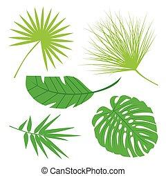 tropische , blätter, sammlung, isolieren, vector., satz