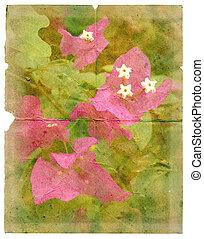 tropische bloem, op, een, stuk, van, oud, paper.