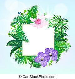 tropische , decor, plein, kaart