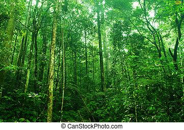 tropische , dicht bos