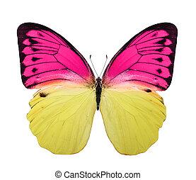tropische , farbe, hell, papillon