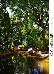 tropische , forest., meer