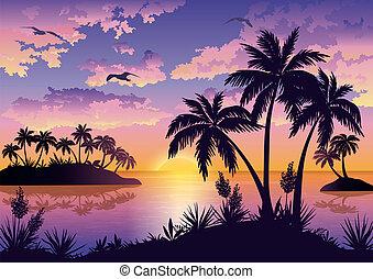 tropische , handflächen, himmelsgewölbe, vögel, inseln