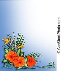 tropische , hibiscus, bloemen, grens