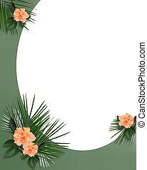 tropische , hibiskus, umrandungen