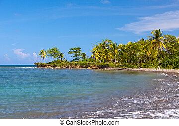 tropische , jamaica., natur