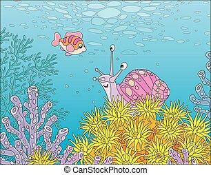 tropische , koralle, schnecke, riff, meer, fische