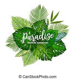 tropische , kraeuter, blätter, baum, handfläche