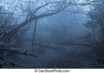 tropische , mist, bos