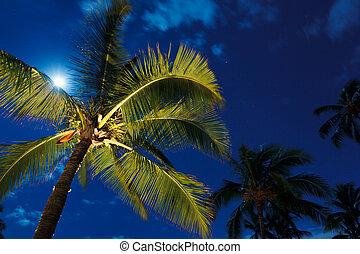 tropische , nacht