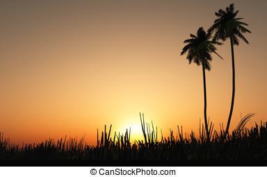 tropische , ondergaande zon , zonopkomst