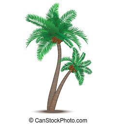 tropische , palmboom, met, kokosnoten