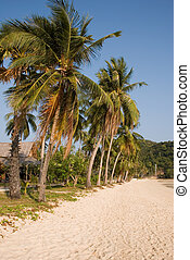 tropische , palme strand, bäume