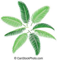 tropische , palmen