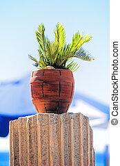 tropische, Pflanze, Topf, rotes, tonerde