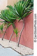 tropische , planten