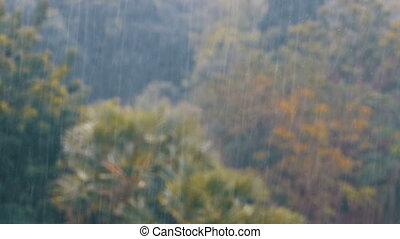 tropische , regenstürm, in, der, dschungel, gegen, der, hintergrund, von, a, grüner wald, mit, a, palme