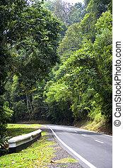 tropische , straat, rainforest