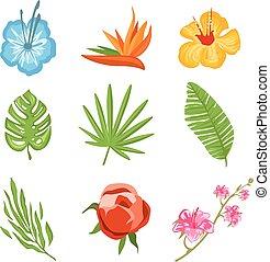 tropische , traditionelle , blumen, satz
