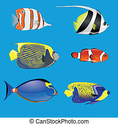 tropische vissen