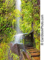 tropische , waterval, madeira