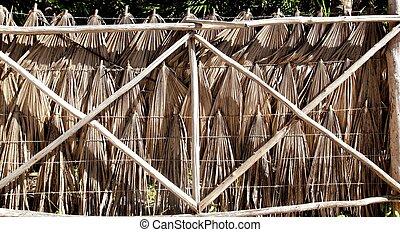 tropische , zaun, palmenblätter, und, holz, badehose