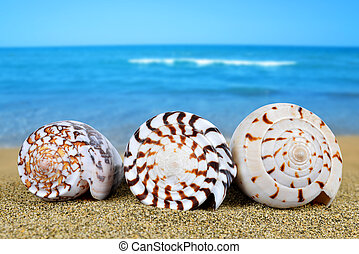 tropische , zee schalen