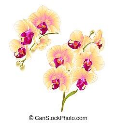 tropischer betrieb, satz, zweige, gelber , vector.eps, vier, orchideen