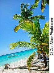 tropischer strand, mit, handfläche
