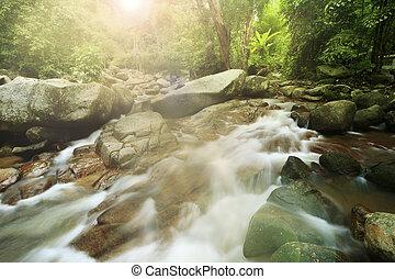 tropischer wald, wasserfall, in, thailand