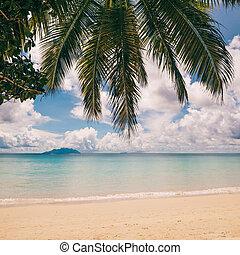 tropisk ö, strand., perfekt, semester, bakgrund.
