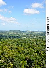 tropisk, baldakin, rainforest