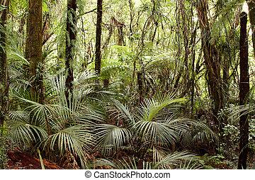 tropisk, djungel, skog